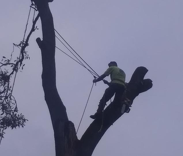 Branching Out Tree Care Experts: Tree pruning in Lynchburg and Forest